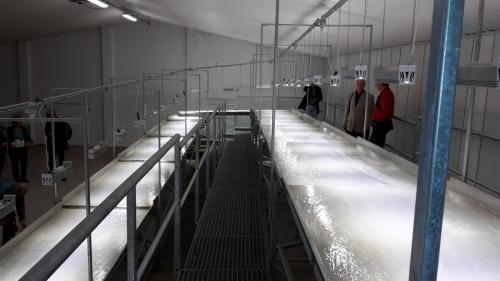 Plošina pro kultivaci řas II